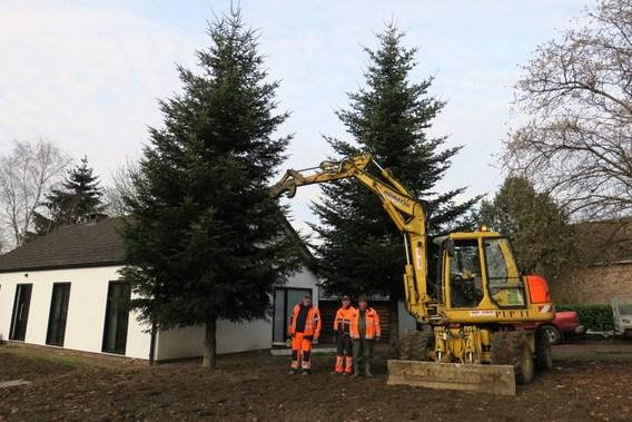 Editiepajot Herne Een Kerstboom Van Eigen Kweek Siert Het